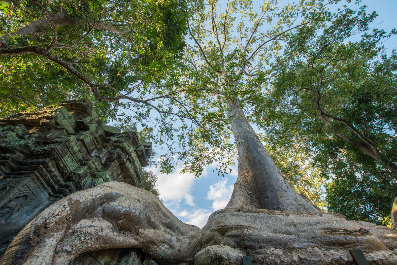 cambodia-photo-tours-angkor-wat-ta-prohm-temple-trees